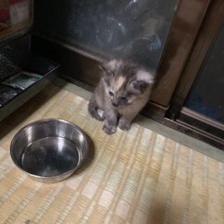 野良猫が産んだ仔猫→ネズミ色