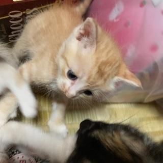 野良猫が産んだ仔猫→茶色