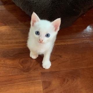 4月14日生まれ 幸せを呼ぶシロ猫 兄弟