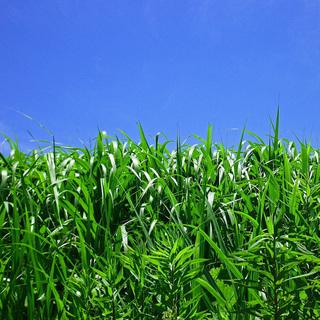 空地、庭、田畑の草刈 1㎡あたり¥50円(税抜)より承ります。