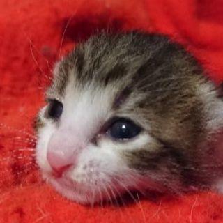 身元確かな方 子ネコ 飼ってくれませんか?