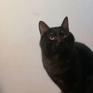 黒猫♂の里親さがしてます