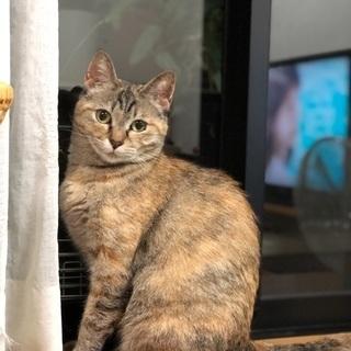 ぶさかわの甘えん坊のメス猫さんです