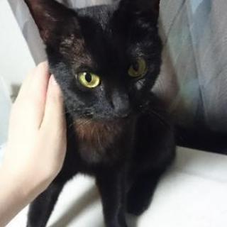 【交渉中】大人しい黒猫ちゃんです!