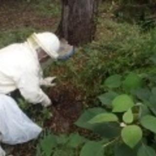 ハチ・ネズミ・カラスなどなど 害虫・害獣駆除はお任せ下さい!