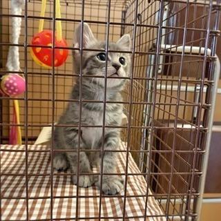 グレーに縞の毛色の仔猫と黒めの仔猫