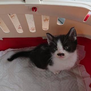 【お話し中/生後約1ヶ月】野良猫の仔猫です