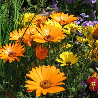 花壇の草花の植え付け致します。