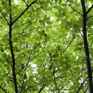 無料でお庭の樹木で見本剪定します。