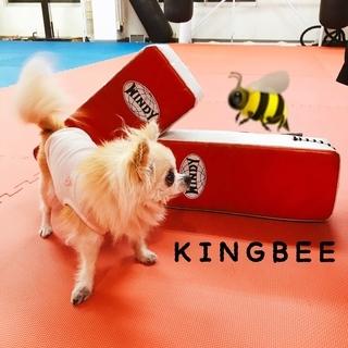 ☆キックボクシング・空手を始めるなら☆   KINGBEE SPO...