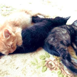 子猫生後4ヶ月