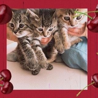 5月25日野良子猫3匹保護しました