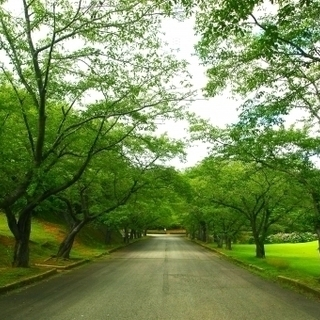 街路、公園等での緑地管理の施工承ります。