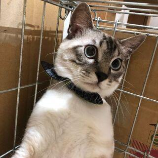 6月2日(日)琉球・奄美大島特集 猫の譲渡会に出します❤️マテリア...