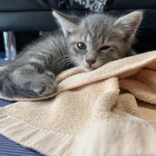 生後3週間の野良猫ちゃん