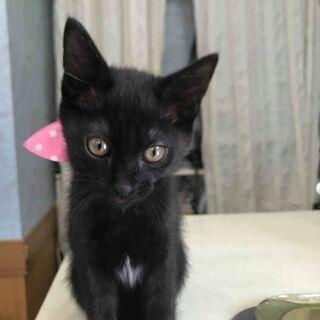 6月2日(日)の猫の譲渡会に出します❤️黒猫女の子ラブちゃん生後3...