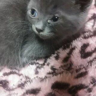 4月生まれの子猫