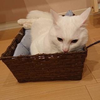 真っ白甘えんぼ − 埼玉県
