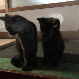2ヶ月の子猫3匹里親募集です