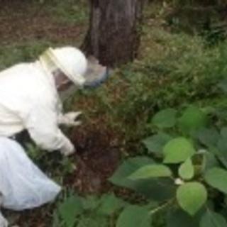 蜂のシーズン到来…ハチの巣はスピードが勝負!