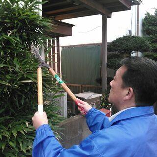 庭木の剪定します。