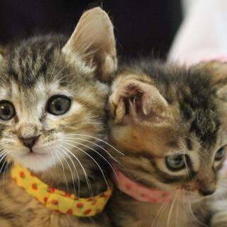 動物管理センターに持ち込まれた可愛い幼稚園3兄妹です