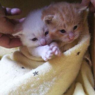 可愛い茶虎親子猫の里親探しています