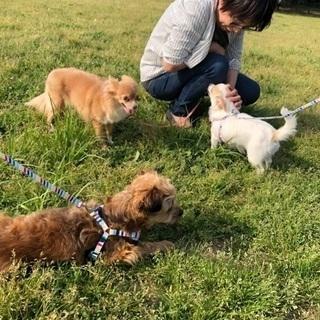 愛犬との楽しい生活を!型にはまったトレーニングや躾は本当に必要?