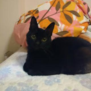 生還した奇跡の黒猫君!!