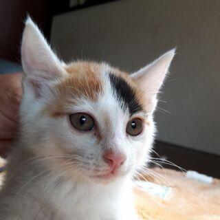 生後2ヶ月半~3ヶ月くらい。(完全野良猫、確認、届け出済)