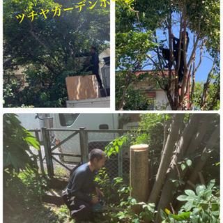 庭木の剪定☆伐採 抜根致します。庭の手入れ店【所沢市 狭山市志木...