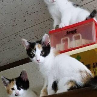 2ヶ月の子猫(3匹)