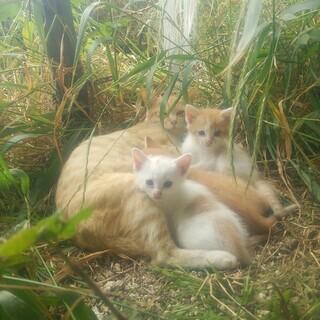 4月生まれ3匹の子猫。里親を募集しています