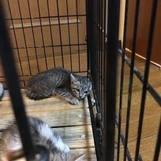 家に迷い込んできた野良猫の赤ちゃん