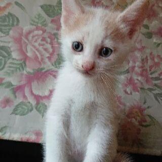 もうすぐ二ヶ月になる4つ子のオス猫ちゃんです。
