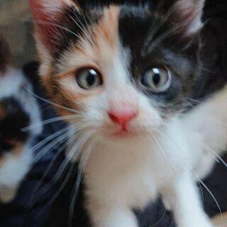 4つ子の子猫ちゃん‼️2ヶ月位になります。