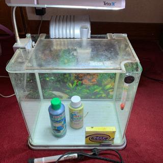 格安 熱帯魚 おしゃれな小型水槽 30センチ