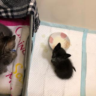 子猫ちゃん達を保護しましたฅ^• ·̫ •^ฅ