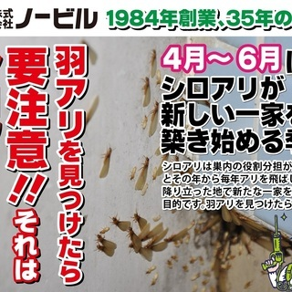 愛知県三河地方で35年の実績、シロアリ駆除はノービルにお任せください!