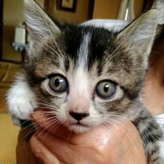 子猫の里親さんになって♡一旦受付中断します