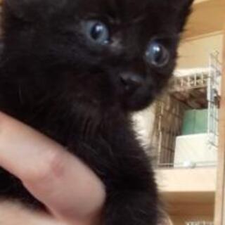 黒猫(子猫)、里親さん募集!