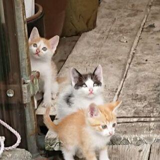 子猫3頭と母猫 親子4頭いっしょに大事にしてくる人さがしてます