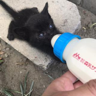 保護猫ちゃん3匹 里親募集