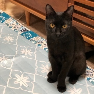 無邪気で優しい黒猫君