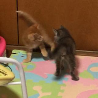 子猫、仲良し姉弟