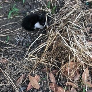 生後1ヶ月くらいの子猫