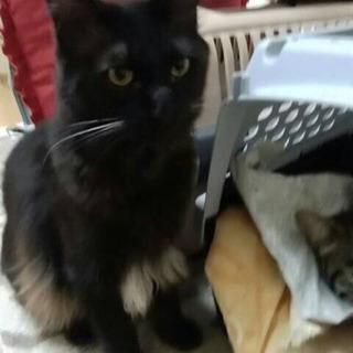 美形な長毛黒猫兄妹✨