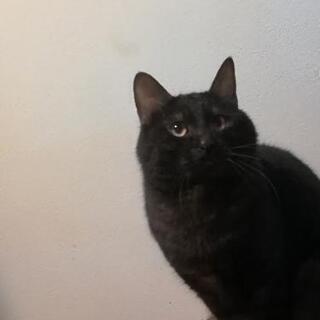 ♂猫、里親探してます。