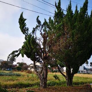 長野県!木の伐採、処分致します。