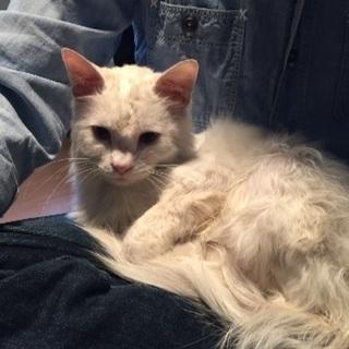 人懐っこい白猫くん
